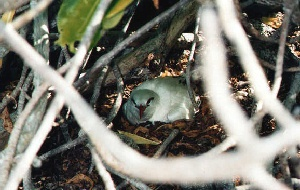 native Bird 3